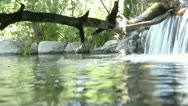 Stock Video Footage of Creek underwater shot