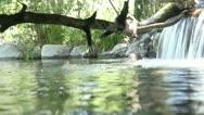 Creek underwater shot Stock Footage