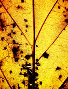 Grunge yellow leaf background Stock Photos