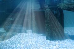 underwater landscape with rocks - stock photo