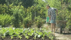 Senior farmer working in vegetable patch Stock Footage