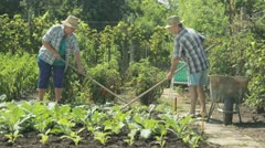 Stock Video Footage of senior farming couple on field