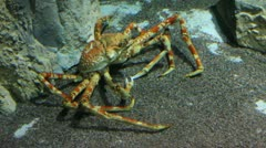 Large  crab underwater Stock Footage
