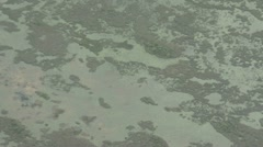 Everglades seen from above Stock Footage