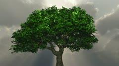 Tree - godrays Stock Footage