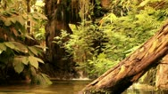 Stock Video Footage of tropical rain forest