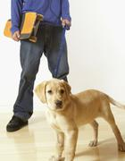 Puppy dog on leash Stock Photos
