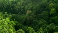 Timelapse tree top shadows Stock Footage