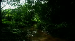 Timelapse jungle stream - stock footage