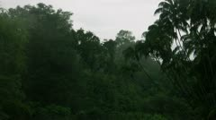 Timelapse Cameron forest Stock Footage