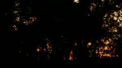 Timelapse tree sunrise - stock footage