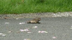 Frog dies of heat stroke -summer heat wave Stock Footage