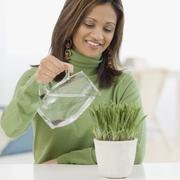 Indian woman watering potted plant Stock Photos