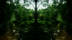 Timelapse mirrored jungle Stock Footage