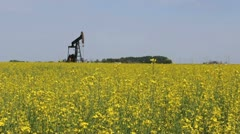 Oil Pump In Canola Field - stock footage