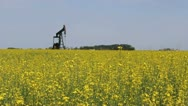 Oil Pump In Canola Field Stock Footage