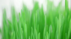 Rotating fresh new green grass bunch Stock Footage