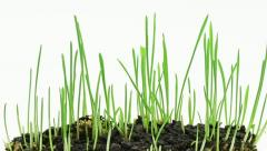 Accelerated growing of fresh new green grass Stock Footage
