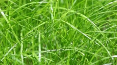 New fresh green garden grass flapping in the wind Stock Footage