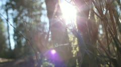 Lens Flare Through Trees In Woods Bokeh Beauty - stock footage