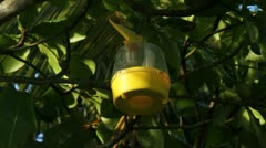 USDA FLY TRAP: nile virus-dengue-malaria-Chikungunya-mosquito-pandemic-Zika 2 - stock footage