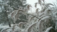 Stock Video Footage of Autumn Snow Grass