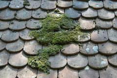 moss on the roof tiles - stock photo