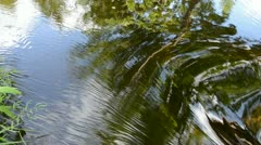 Abstract summer river stream background Stock Footage