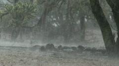 Arizona Monsoon Rain Audio Stock Footage