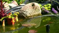 German garden pond Stock Footage