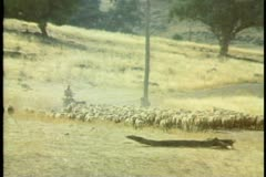 A sheep ranch owner herding sheep in Australia Stock Footage