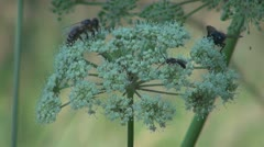 Flowers and insects Stock Footage