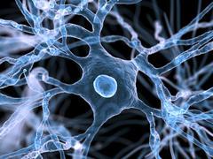 Nerve cells, artwork Stock Illustration