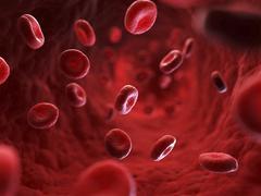 Red blood cells, artwork Stock Illustration