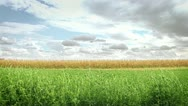 Green Crop Stock Footage