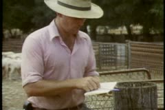 Australia, sheep in pen, open gate, they run out, sheared, no coat or fleece Stock Footage