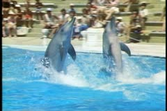 Atlantis Marine Park, Perth, Australia, dolphin show, close up dolphin walks Stock Footage