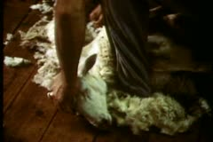 Australia, sheep shearing, close up Australia, sheep head, shear Stock Footage