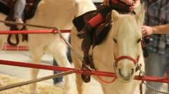 Pony ride Stock Footage