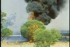 Brush fire of the outback, medium shot, tree goes up in flames, Western Stock Footage