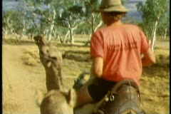 POV from atop one camel, one camel ahead, Alice Springs, The outback of Stock Footage