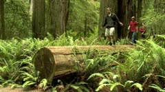 Three young people walking on a log in a forest of giant sequoias Stock Footage
