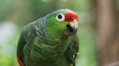 Green macaw Stock Footage
