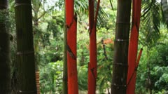 Green and red Costa Rican bamboo plants Stock Footage