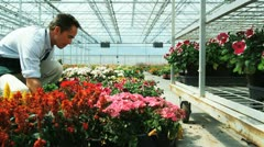 MS TU Shop assistant moving flats of flowers onto shelves / Salem, Utah, USA. Stock Footage