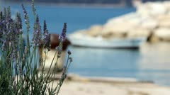 Lavander at the port Stock Footage