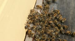 Bees at hive. Stock Footage