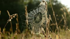 autumn spider-web in morning light - stock footage