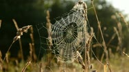 Stock Video Footage of autumn spider-web in morning light