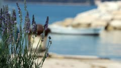Lavander, bee and boat Stock Footage